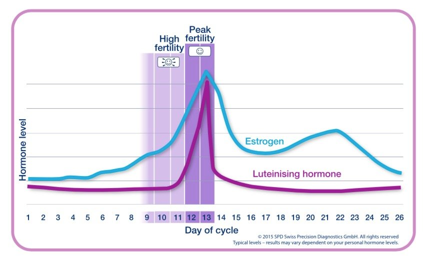 Typical hormone levels during the menstrual cycle